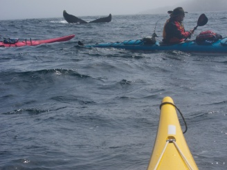 Kayakers and Whale - Newfoundland
