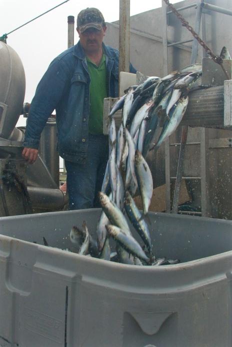 The Day's Catch - Newfoundland