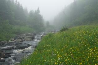 Meadow - Newfoundland