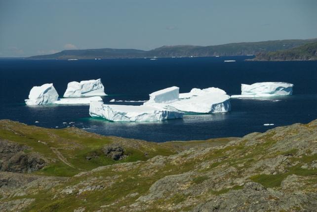 Icebergs in Cove - Newfoundland
