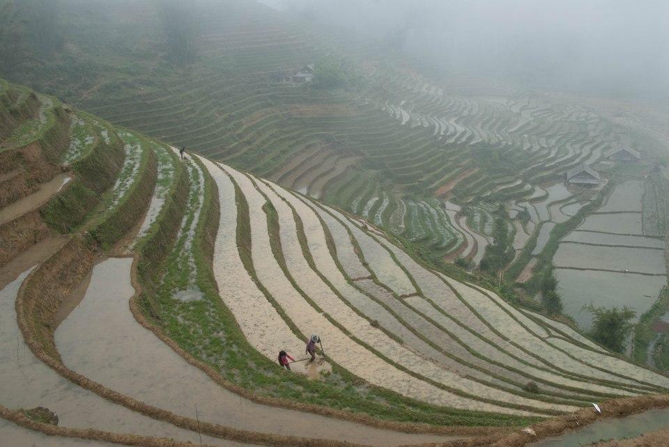 Hmong Ricefileds-1