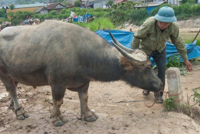 Vietnam-17